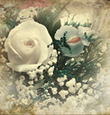 Vintage Style Of  Flower Picture For Background