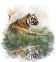 Watercolor Digital Painting Of  Tiger  On Grassy Bank With Reflection