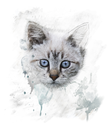 Watercolor Digital Painting Of  Young Cat