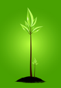 Two young plants on green background