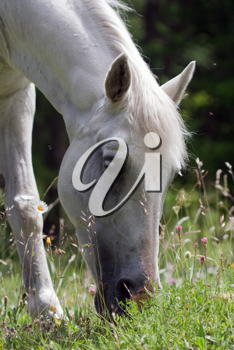 hazed picture of a horse eating grass