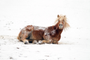 A horse playing in a snowy landscape