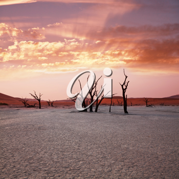 Royalty Free Photo of Dead Valley in Namibia