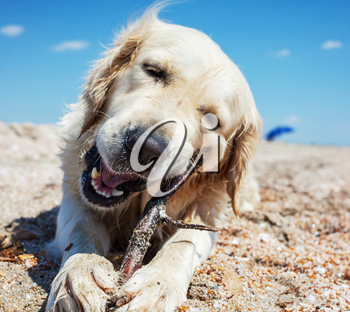 dog on beach