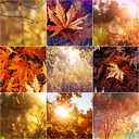 Orange and Yellow Autumn collage