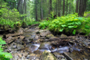 Royalty Free Photo of a Creek in a Forest