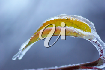 branch with bud under ice
