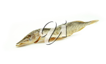Three sea roach fishes isolated on the white background