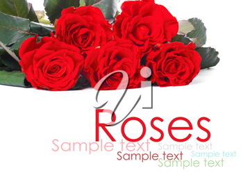 Bouquet of red roses, isolated on white