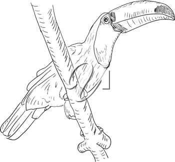 Royalty Free Clipart Image of a Toucan Bird