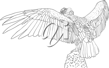 Royalty Free Clipart Image of a Vulture
