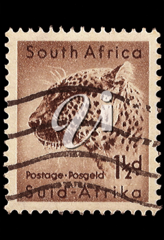 Royalty Free Photo of a Leopard Stamp