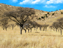 Royalty Free Photo of Leafless Dry Trees