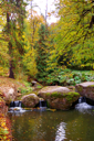 a small river is in the autumn forest