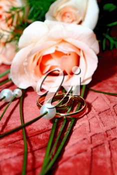 two wedding rings and rose