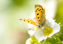 beautiful butterfly in nature. macro