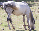 Royalty Free Photo of a Thin Horse