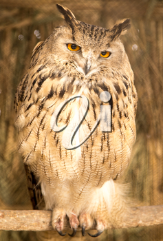 portrait of an owl in the park