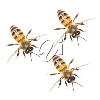 a swarm of bees on a white background