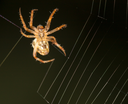 Spider on the web. close