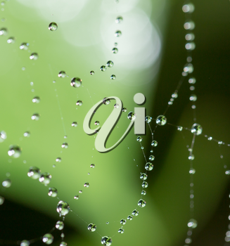 water droplets on a spider web in nature