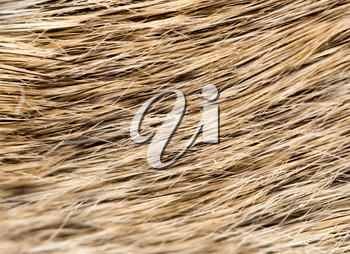 mouse fur as background