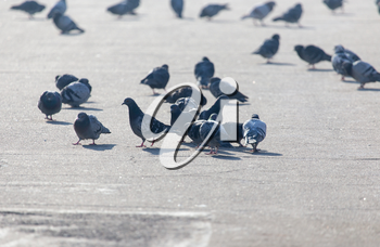 a flock of pigeons in the city