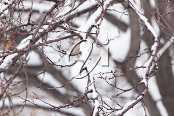 snow on the branches of a tree