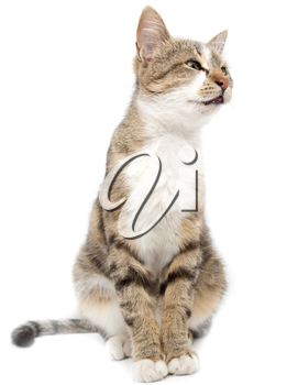 Portrait of a cat on a white background .
