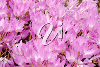 Royalty Free Photo of a Bunch of Flowers