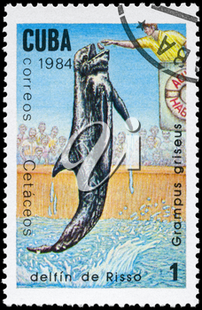 CUBA - CIRCA 1984: A Stamp printed in CUBA shows image of a Risso's Dolphin with the description Grampus griseus from the series Marine Mammals, circa 1984