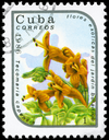 CUBA - CIRCA 1986: A Stamp printed in CUBA shows image of a Tecomaria capensis, from the series