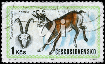 CZECHOSLOVAKIA - CIRCA 1971: A Stamp printed in CZECHOSLOVAKIA shows the image of the Chamois with the description Rupicapra rupicapra from the series World Hunting Exhib., circa 1971