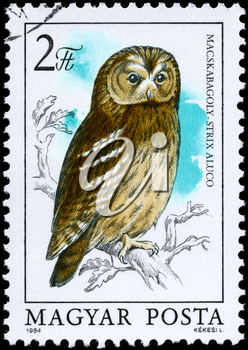 HUNGARY - CIRCA 1984: A Stamp shows image of a Tawny Owl with the inscription Strix aluco from the series Owls, circa 1984