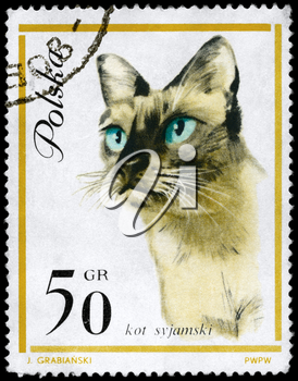 POLAND - CIRCA 1964: A Stamp printed in POLAND shows image of a Siamese Cat from the series European Cat, circa 1964