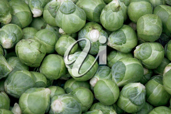 Royalty Free Photo of Brussel Sprouts