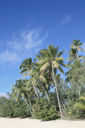 Royalty Free Photo of Palm Trees in Fiji