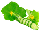 Cutting cucumbers on  with green leaf and yellow blossom cluster. Isolated over white.