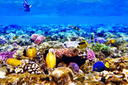 Coral and fish in the Red Sea. Egypt, Africa