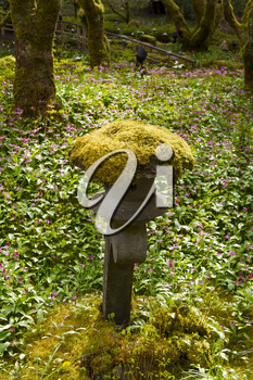 Moss growing on top of stone stature in Japanese Garden