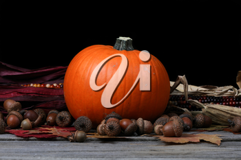 Pumpkin for Thanksgiving or Halloween holiday with dark background setting