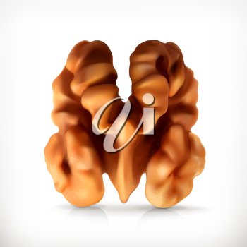 Walnut, vector icon