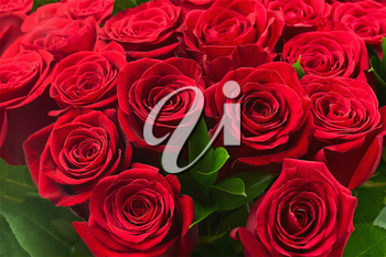 Colorful flower bouquet from red roses for use as background. Closeup.