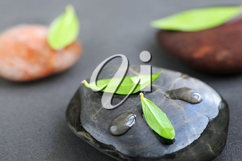 Stones submerged in water with green leaves and water drops