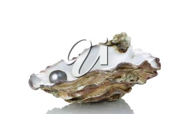 Black Pearl in an oyster shell, isolated on a white background with reflection.