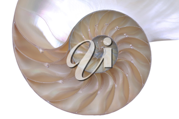 Close up of a cut away section from a Nautilus shell.