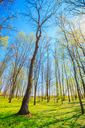 Spring Time In Park. Green Young Grass, Trees On Blue Sky Background