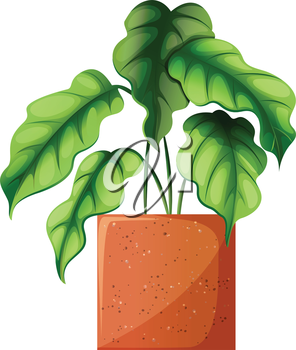 Illustration of a leafy green ornamental plant on a white background