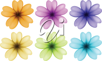 Illustration of the six colourful and blooming flowers on a white background