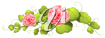 Illustration of a plant with carnation pink flowers on a white background